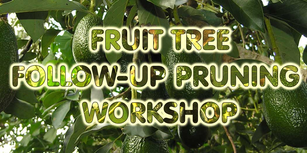 Fruit-Tree-Follow-up-Pruning-Workshop-eventbrite